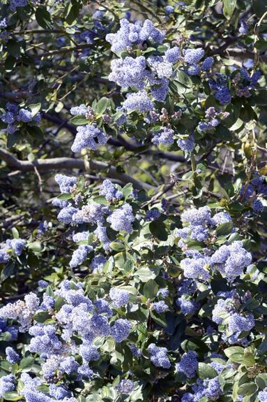 Lilo de California en el Parque del Retiro