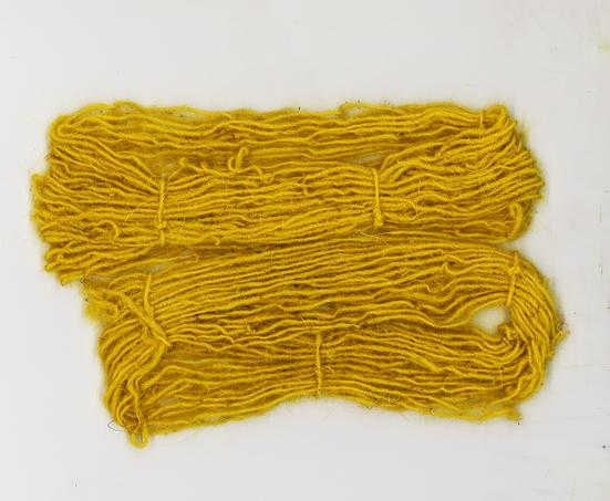 lana xisqueta teñida con flores de Sonchus tenerrimus